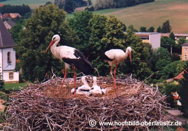 Storchennest in Wittgendorf